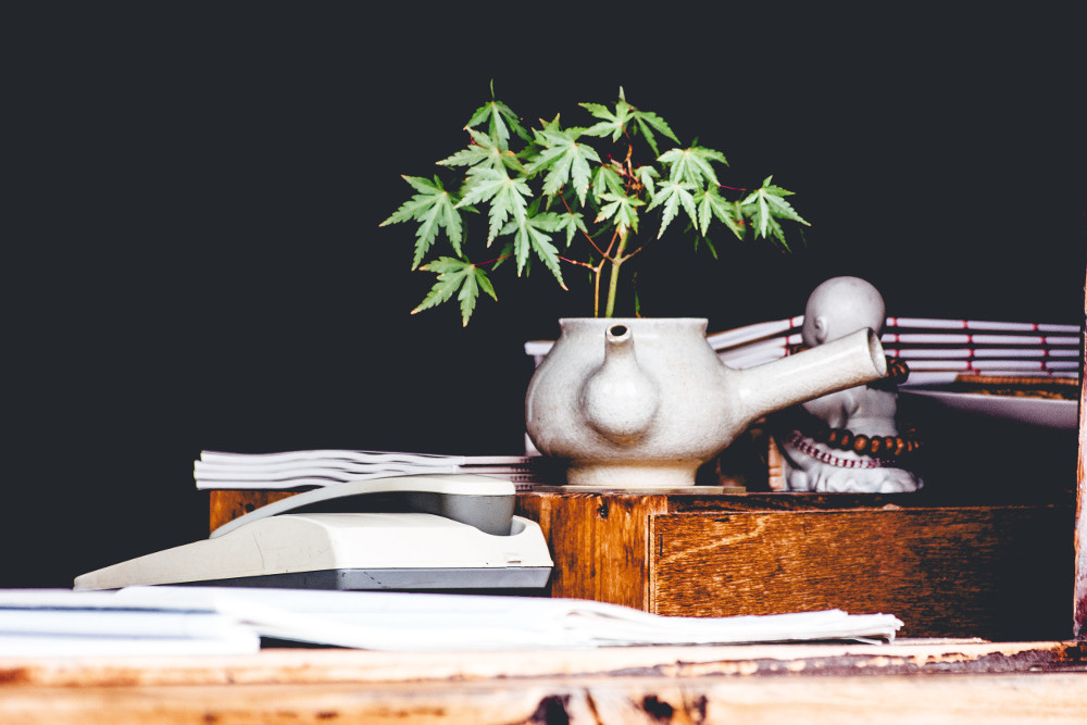 plant of cannabis on table