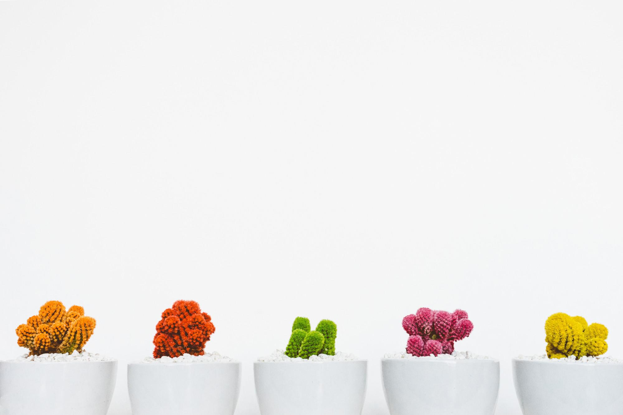 Cactus Gems